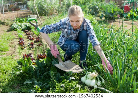 Smiling young girl  gardener with garden shovel picking green onion  in outdoor #1567402534