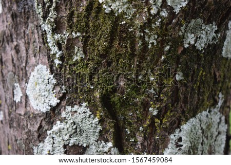 a close-up from an old tree in the forest of Wilderness, south africa #1567459084