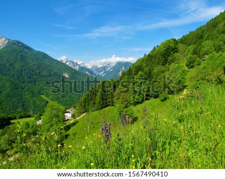 View of mountains above Kranjska Gora, Slovenia incl. Visoka Ponca and Kotova Spica taken from a summer meadow with purple meadow clary or meadow sage (Salvia pratensis) above village Srednji Vrh #1567490410