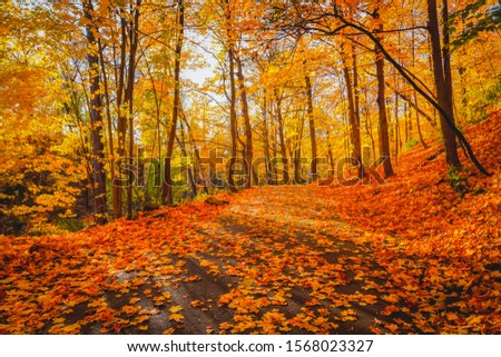 Beautiful and colorful autumn landscape with trees, leaves, sky and sun in forest. Yellow orange red maple leaves falling from trees on sunny day in october. Natural background. Autumn season concept. #1568023327