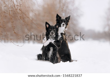 two adorable black dogs hugging outdoors in winter #1568221837