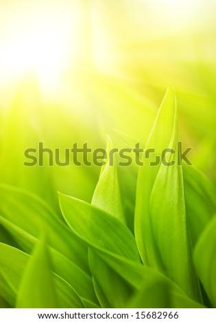 Fresh green grass (shallow DoF) #15682966