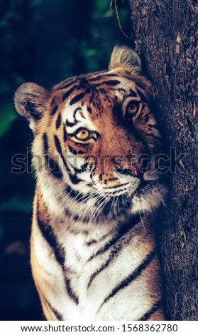 Tiger is the forest animal #1568362780