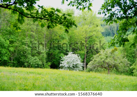 spring meadow with meadow flowers and white blooming tree at the edge of the forest, #1568376640