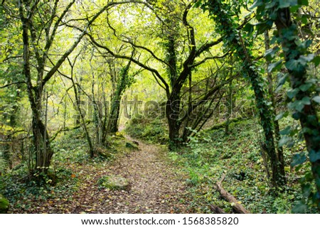 Trail winding through a forest. Turns left; turn right. Trees, green and autumnal coloured leaves. #1568385820
