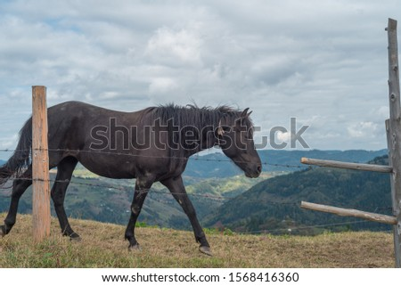 The horse goes along the fence against the backdrop of the mountains #1568416360