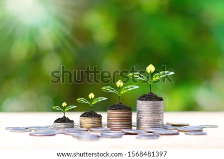 Small tree that grows on a pile of money. Financial investment ideas. #1568481397