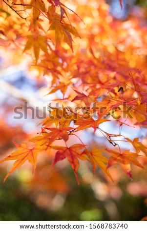 Amazing red & orange & yellow autumn  #1568783740
