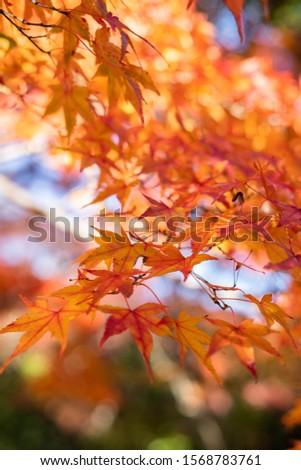 Amazing red & orange & yellow autumn  #1568783761