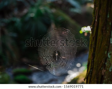 Spider web stuck to the tree with blurry background of natural stream and greenery.