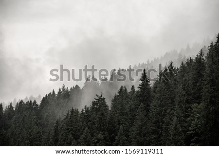 Misty foggy mountain landscape with fir forest and copyspace in vintage retro hipster style #1569119311