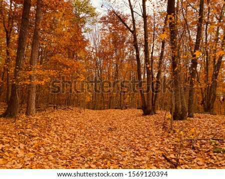 Forest trail covered with autumn leaves #1569120394