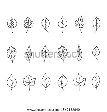 Sketch Trees Leaves - Vector Set #1569162640