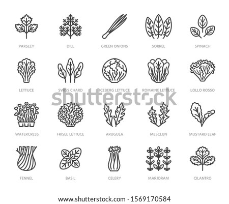 Green vegetables flat line icons set. Lettuce, spinach, cress salad, chard, dill, celery vector illustrations. Outline pictogram for fresh food vegan store. Pixel perfect. Editable Strokes. #1569170584
