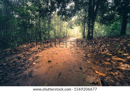 relaxing in nature with beautiful tropical tree with sunlight and sunlight background #1569206677