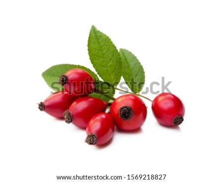 Ripe rose hip isolated on white background #1569218827
