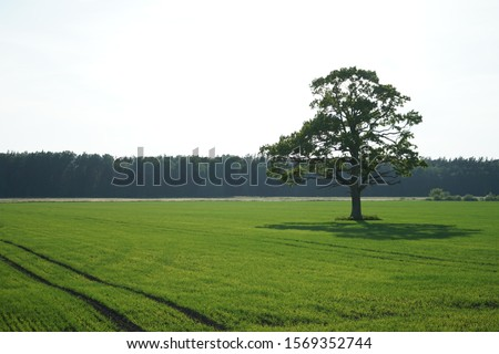 A Single Tree Standing Alone with Blue Sky and Grass. Royalty-Free Stock Photo #1569352744