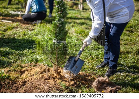Planting a plant in the ground. The gardener is planting a tree. Creating a garden. Work on the land. #1569405772