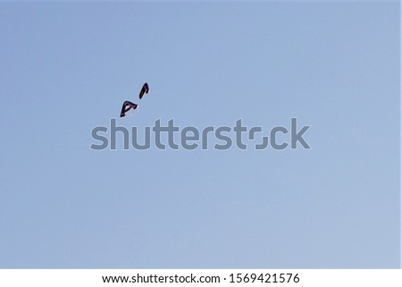 Two lettered helium balloons escape up into the blue sky atmosphere.  Lighter than air noble gas element fills soft shaped containers, Letter A against negative space. #1569421576
