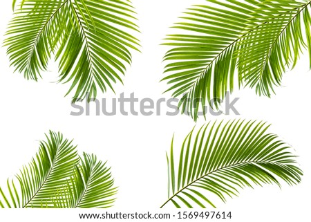 Concept texture leaves abstract green nature background tropical leaves coconut isolated on white background #1569497614