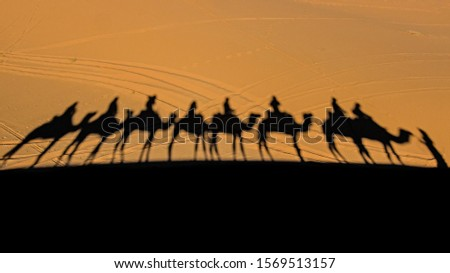 On the dunes of the sahara, a caravan of camels draws its shadow profile on the sands scorched by the sun. #1569513157