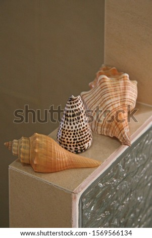 Decoration details made of clam, shell and scallop.