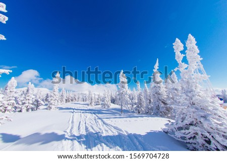 Beautiful winter landscape with fur trees coveres with white snow on the background of blue sky in a sunny winter day. #1569704728