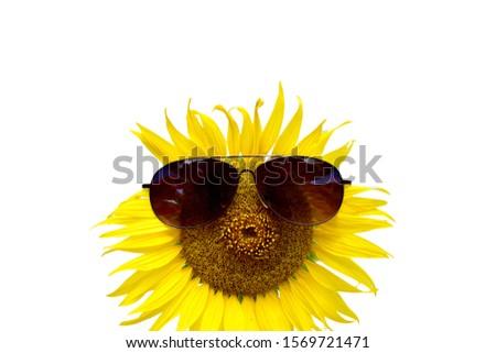 Sunflower wearing glasses on white background