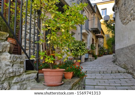 A narrow street among the old houses of a mountain village in the Molise region #1569741313