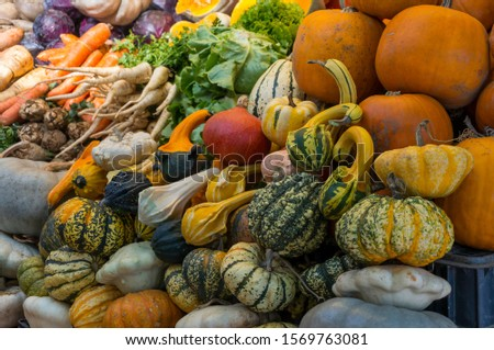 Autumn Color Pumpkins im Whole Foods Market. Fall Inspired Color Palettes. Autumn vegetable market: variety of squash and Pumpkins #1569763081