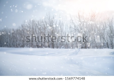 Deciduous forest without a leafage in the middle of winter covered with frost frosty landscape #1569774148