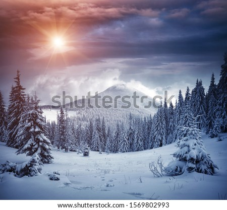 Awesome winter landscape with spruces covered in snow. Frosty day, exotic wintry scene. Magic Carpathian mountains, Ukraine, Europe. Winter nature wallpapers. Splendid christmas scene. Beauty world. #1569802993