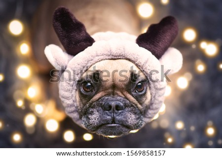 Adorable cute small festive French Bulldog dog dressed up as reindeer with plush antler headband looking up, surrounded by blurry Christmas tree lights on ground #1569858157