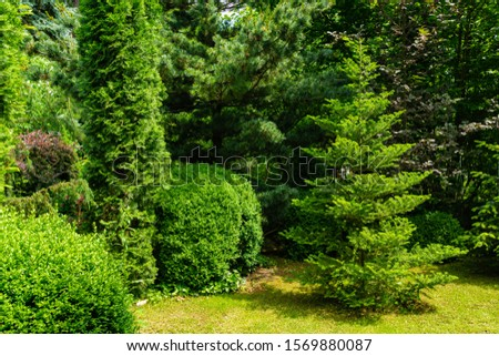 Landscaped garden with evergreens. Spring landscape with boxwood bushes, Abies koreana fir, Hootsman juniper, Japanese pine Glaua and western thuja. Atmosphere of peace and tranquility.  #1569880087