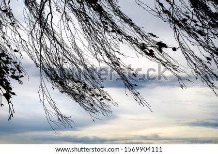 silhouette of autumn branches on a background of gray sky, windy day #1569904111