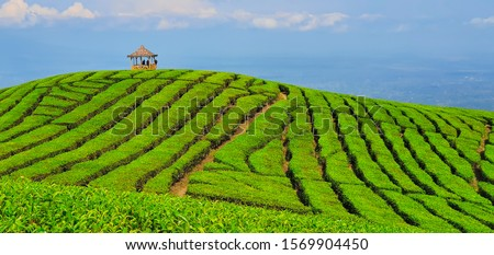 Black silhouettes of people chilling in gazebo on hill top with scenic view. Traditional highland tea plantation in mountains. Popular place, travel destination at family vacation tour in Jawa island. #1569904450