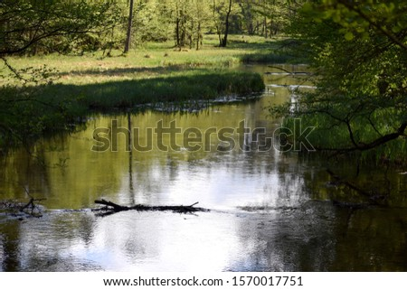 Slow peacefull river in thewoods #1570017751