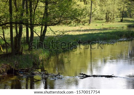 Slow peacefull river in thewoods #1570017754