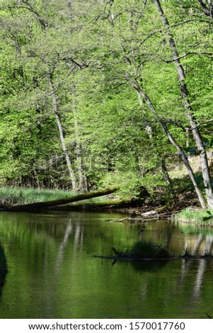 Slow peacefull river in thewoods #1570017760