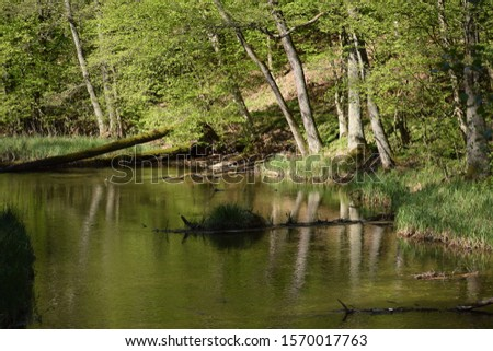 Slow peacefull river in thewoods #1570017763