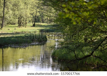 Slow peacefull river in thewoods #1570017766