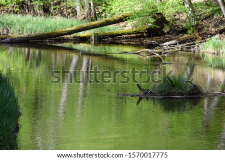 Slow peacefull river in thewoods #1570017775