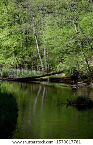 Slow peacefull river in thewoods #1570017781
