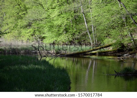 Slow peacefull river in thewoods #1570017784