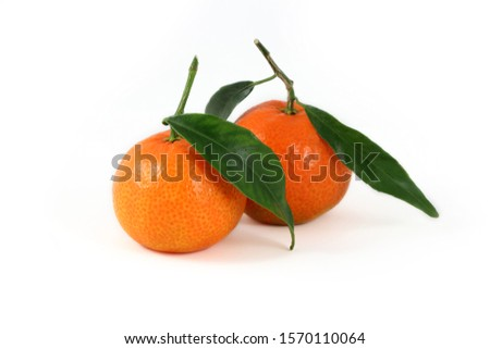 Group of fresh  clementines variety  corsican  with leaves  isolated on white background #1570110064