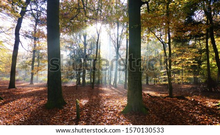 Wonderful colors on an autumn day a forest in Utrecht Province, the Netherland #1570130533