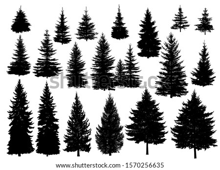 Set of silhouettes of pine trees or fir trees.