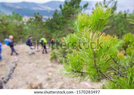 Group of active people with backpack walking through the forest. Hiking. Adventure. Healthy lifestyle. #1570283497