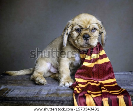 little doggie in the image of Harry Potter #1570343431