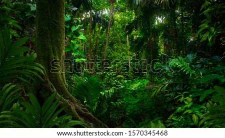 Tropical jungles of Southeast Asia in august Royalty-Free Stock Photo #1570345468